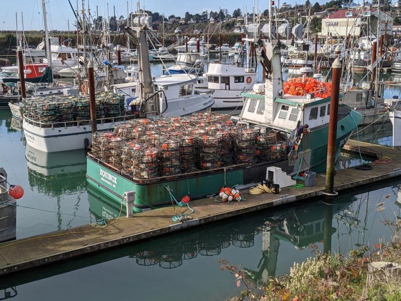 Crab-season-2020-Port-of-Brookings-Harbor
