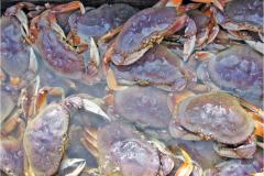Southern Oregon Crab season 2019