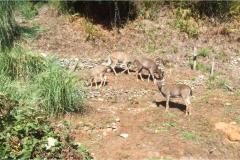 Ocean Suites Motel Deer Guests
