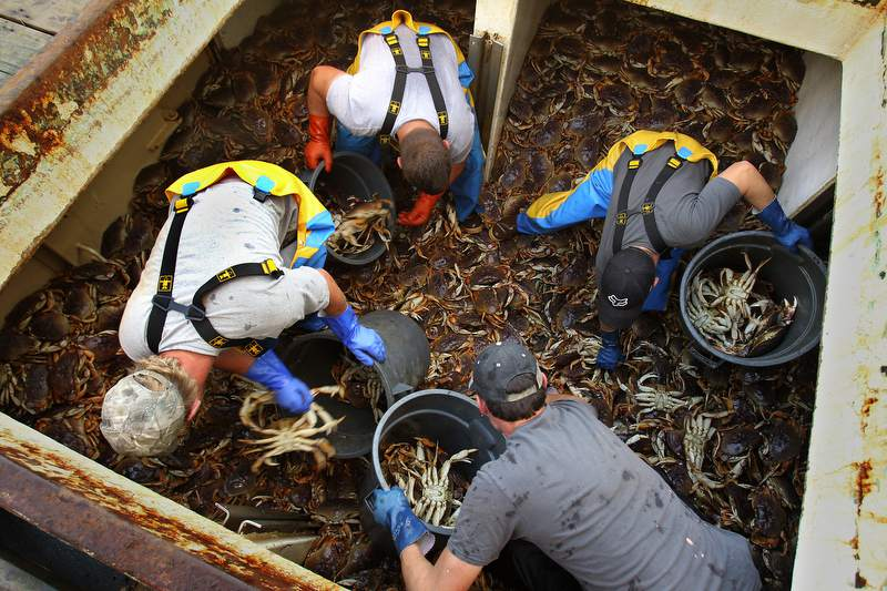 Crabbing is great out of Brookings, Oregon