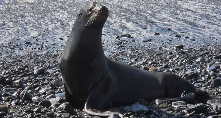 California sea lion at Sport Haven Beach | Short walk from Ocean Suites Motel, Brookings, OR