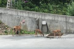 Deer-eating-from-bird-feeder