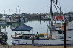 Fresh-Tuna-at-Port-of-Brookings