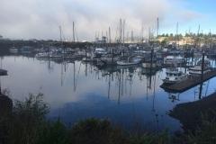 POBH-Harbor-foggy-morning-burning-off