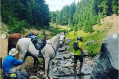 Sean-Nolan-PCT-From-Crater-Lake-north-and-unexpected-horses