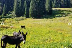 Sean-Nolan-PCT-passing-Mt.-Shasta-then-onto-Seiad-Valley-curios-Donkeys